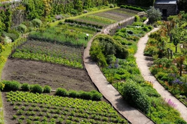 A photo of a large garden with many planting areas, pathways and enclosures.