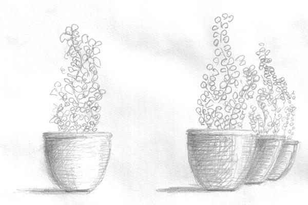 A drawing of plants in pots.