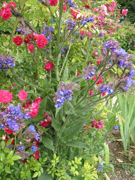 A photograph showing attractive plants that are green, red and blue in colour