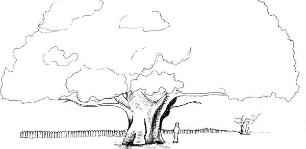 Black and white drawing of a tree, a person, a fence and a shrub to illustrate scale.